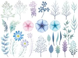 Set of assorted botanical elements isolated on a white background.