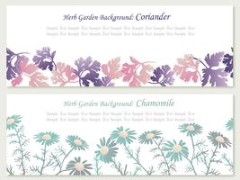 Set of two vector seamless background illustrations with herbs: coriander and chamomile.