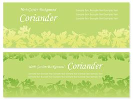 Set of two vector seamless background illustrations with coriander.