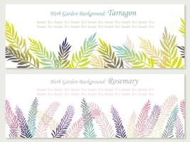 Set of two vector seamless background illustrations with herbs: rosemary and tarragon.