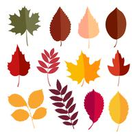 Autumn elements collection vector