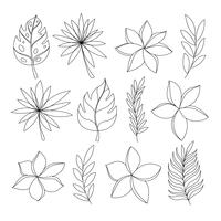 Exotic tropical flowers and leaves hand draw set