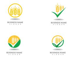 Weizen Logo und Symbole Vorlage Vektor Icon Design
