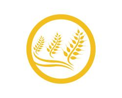Progettazione dell'icona di vettore del modello di Logo del grano dell'agricoltura