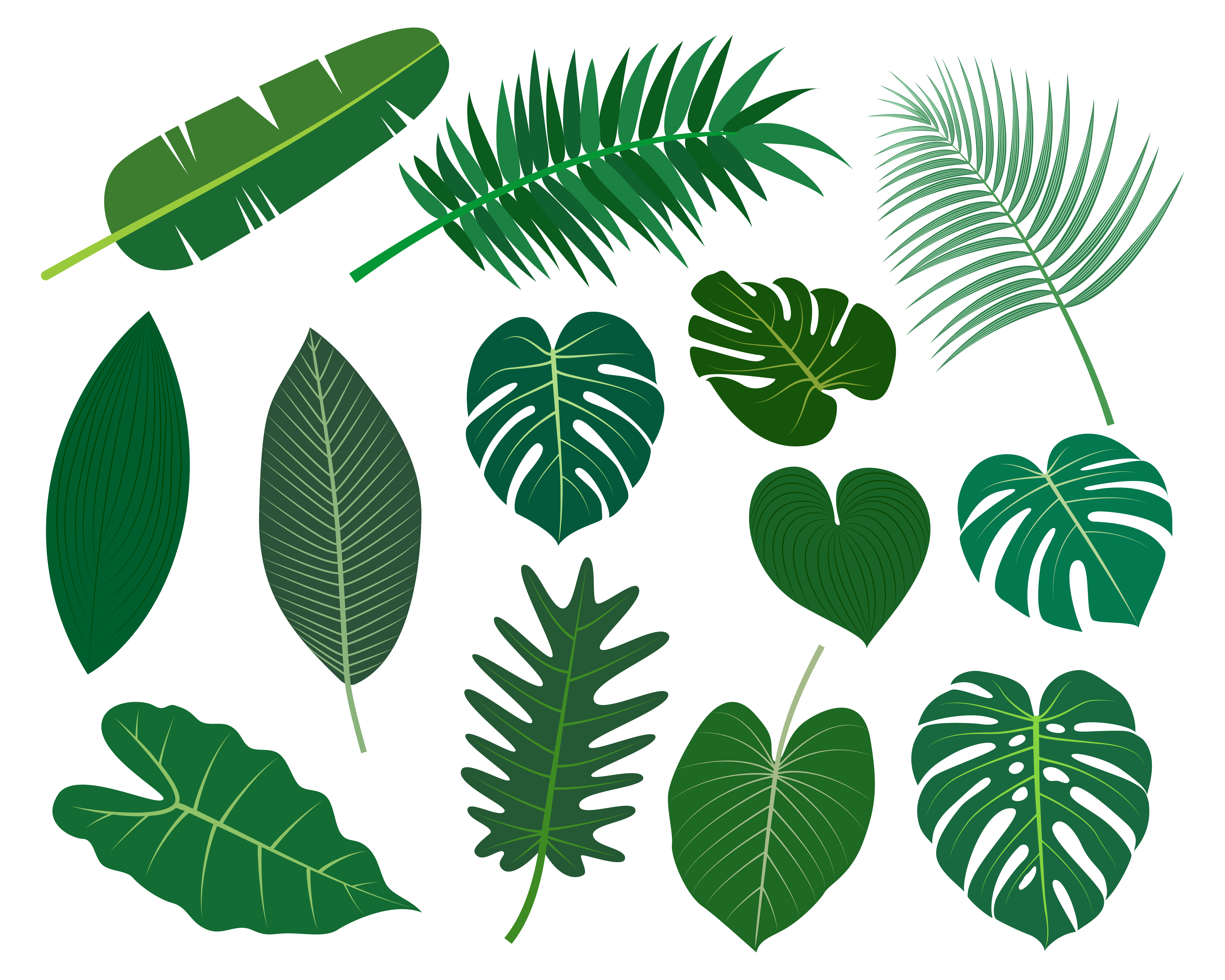 Collection Of Tropical Leaves Vector Set Isolated On White Background Vector Illustration Download Free Vectors Clipart Graphics Vector Art Choose from 600+ tropical leaves graphic resources and download in the form of png, eps, ai or vector hello summer holiday illustration with typography letter and tropical leaves on ocean blue. vecteezy
