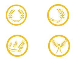 Agricultura trigo Logo Template vector ícone do design