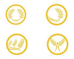 Blé de l'agriculture Logo Template vector icon design