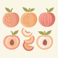 Vector Hand Drawn Peaches