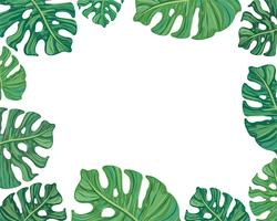 frame summer tropical leaves vector