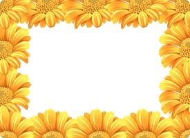 Yellow daisy flower border