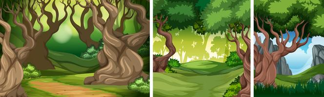 Set of tropical rainforest background