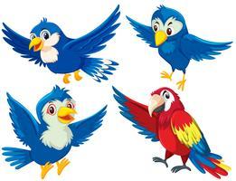 Conjunto de personaje de ave