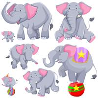 Gray elephant in different actions
