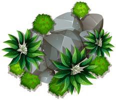 Uma rocha da natureza no fundo branco