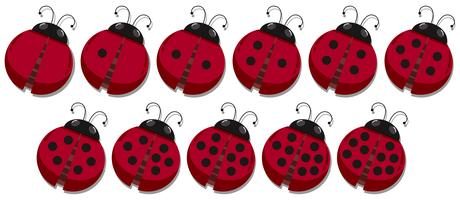 Math count ladybug spots  vector