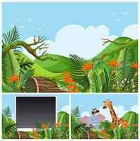 Mountain scenes with wild animals