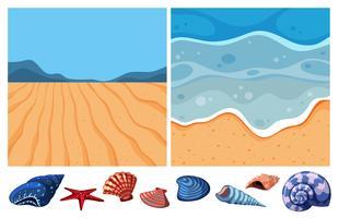 Due scene oceaniche con molte conchiglie