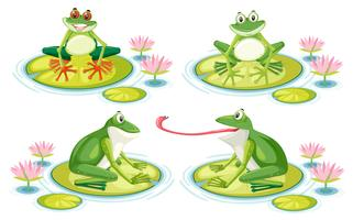 Set of frog on lotus pad