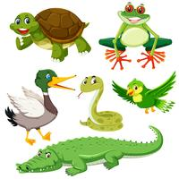 Ensemble d'animal vert