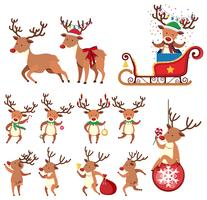Reindeer in Different Action on White Background