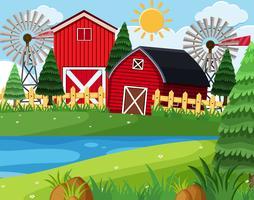 Celeiros vermelhos na cena da fazenda