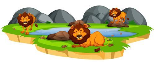 León en el paisaje de la naturaleza