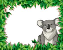 Koala in nature background