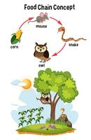 Science Food Chain Concept vector