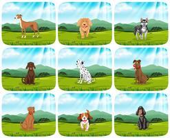 Sats av hundar i parkscenen