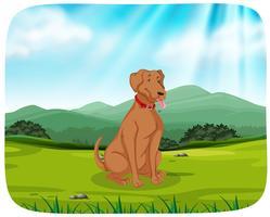 Cane nella scena del parco