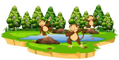 Monkey in nature scene