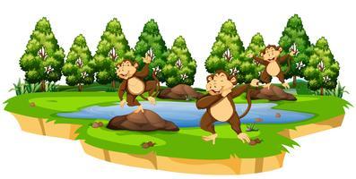 Scimmia nella scena della natura