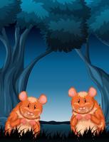 Chimpmunks en escena nocturna madera natural