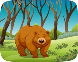 brun björn i naturen scen