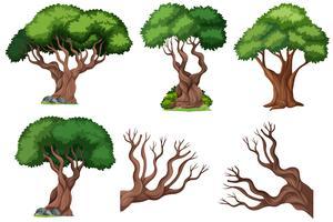 Set di albero ornamentale
