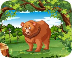 A grizzly bear in jungle