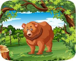 Um urso pardo na selva