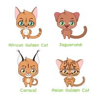 Set of medium sized wild cat species