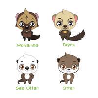 Conjunto de várias espécies de doninha