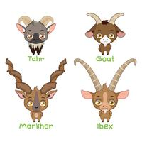 Set of goat species vector