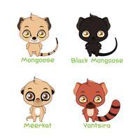 Set of mongoose species illustrations