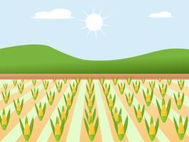 High quality design sweet golden and cute of farm corn with colorful beauty. vector illustration sign.