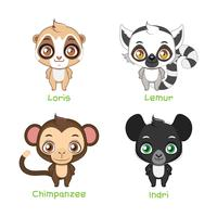 Ensemble d'illustrations de primates