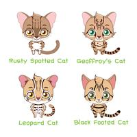 Set of small sized wild cat species vector