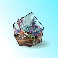 Flower arrangement of succulents in a geometric glass aquarium. Vector