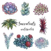 Set of succulents. Watercolor. Graphics.Isolated objects. Vector illustration.