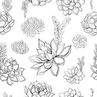Succulents. Seamless pattern. Graphics. Coloring. Vector illustration.