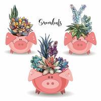 Arrangement de fleurs de plantes succulentes. Dans des pots amusants en forme de cochons. Illustration vectorielle