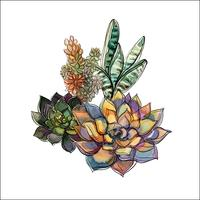 Bouquet of succulents. Flower arrangement for design. Watercolor. Graphics. Vector.