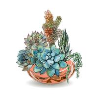 Succulents in glass aquariums. Colored sand. Flower decorative compositions. Graphics. Watercolor. Vector.